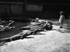 Kids used to cuddle alligators at this wacky LA zoo... HOW FREAKING COOL!!