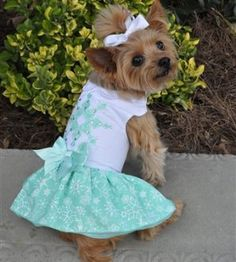 Dream Dogs has this exquisite Turquoise Crystal Dress with Leash and D-Ring available now at 50% off. Only $19.99 for all sizes XS through to Large. Get them while they last here at Shizzle Dogs Marketplace! #dogs #dogdress