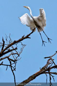 On Angel's Wings ~ #wildlife #birds