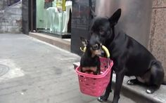 Dog Takes Care of Puppy with Broken Leg While Owner Goes toWork (VIDEO): http://onegr.pl/1ghVGF1