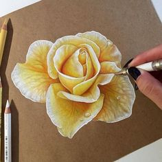 Which flower is your favorite coloredpencil flower rose drawing # Plant Drawing, Painting & Drawing, Drawing Flowers, Flower Drawings, Rose Drawing Pencil, Drawing Drawing, Drawing Ideas, Rose Sketch, Colored Pencil Techniques