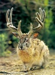 Image result for jackalope stuffed animal