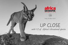 Up close conservation - Africa Geographic Magazine