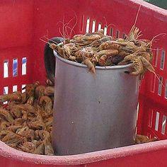 Nordsee: Büsumer Krabben