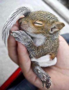 Little baby Squirrel