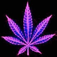 Weed Marijuana Glitter Graphics | Posted on: Jan 23rd 2009, 2:09:18pm