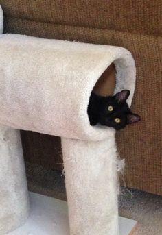 Shadow enjoying the cat condo Scott built