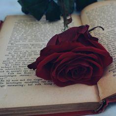 Flower Background Wallpaper, Sunflower Wallpaper, Flower Phone Wallpaper, Rose Wallpaper, Tumblr Wallpaper, Flower Backgrounds, Aesthetic Roses, Book Aesthetic, Red Aesthetic