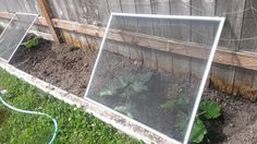 protecting transplants with window screens