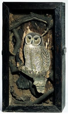 Joseph Cornell: Owl Box,1945-6. Cornell was a self-taught but accomplished artist who worked in mixed media, well known for his boxes.