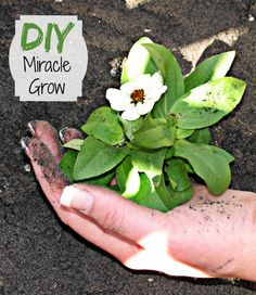"A DIY ""Miracle Grow"" made from ingredients I already have :-)"