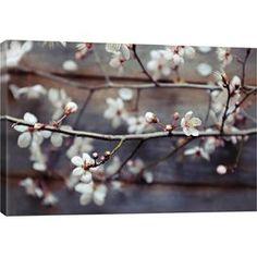 Rustic Cherry Blossom Canvas Print