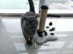 Gracie Cat   Pawshake