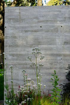Valeriana Officinalis in ADV7 garden in Madrid
