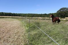 Don't put your horse on the wrong side of the fence this spring! --   The grass starts to grow actively when the soil temperature consistently reaches 5 degrees Celsius and can be full of calories! For every kilogram (dry matter) eaten, your horse could be consuming up to 75g of sugar and 500g of Water Soluble Carbohydrate (WSC). Studies have shown that ponies turned out un-muzzled can consume up to 5% of their own bodyweight in grass. If the same applies to a 500kg horse, this would equate…
