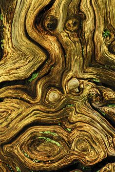 Close-up texture of tree trunk. Oak Wood, by Colin Varndell New Forest, Hampshire, UK