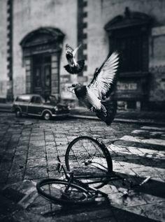 pigeons and a bike at Verona, Italy by Dragan Todorovic http://urbanfragment.wordpress.com/category/bw/