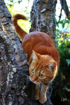 Red kitty in a tree