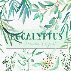 Eucalyptus branches watercolor clipart hand by LABFcreations