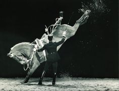The streangth and power of the horses at cadre noir de saumur Horse Riding School, Horse Dance, Dressage Horses, War Horses, Vintage Horse, Horse World, White Horses, Horse Training, Horse Photography