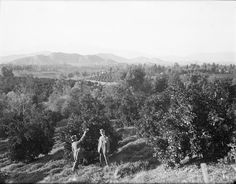 ORANGE GROVE - RIVERSIDE, CALIFORNIA 1910 - H C Tibbitts Glass Plate Negative   eBay