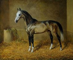 Makka-Shael ©Alexey N. All The Pretty Horses, Beautiful Horses, Akhal Teke Horses, Horse Artwork, Horse Portrait, Horse Drawings, Equine Art, Horse Pictures, Horse Love