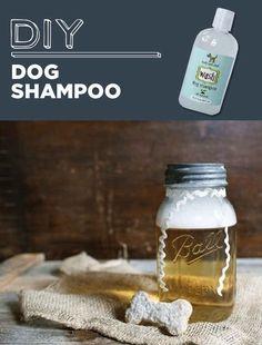Champú para perros hecho en casa