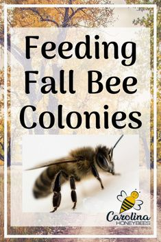 How feeding Fall Bee colonies increases the chance of survival Feeding Bees, Bee Hive Plans, Beekeeping For Beginners, Buzz Bee, Raising Bees, Bee Boxes, Garden Insects, Bee Friendly, Queen Bees