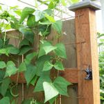 13 Ways To Make A Garden Trellis: {DIY Tutorials} : http://tipnut.com/budget-trellis/