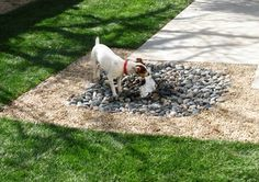 8 Backyard Projects For Your Furry, Four-legged Friends « Burgin Construction Inc. Water resource for dogs - courtesy of HOUZZ.com