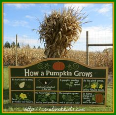 Going to the pumpkin farm was very educational!  I loved this display of how a pumpkin grows.