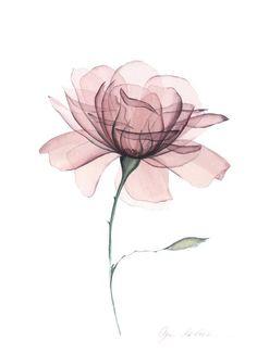 Flower Backgrounds, Flower Wallpaper, Wallpaper Backgrounds, Watercolor Flowers, Watercolor Paintings, Watercolor Rose Tattoos, Painting Flowers, Floral Wall Art, Floral Prints