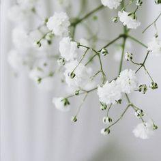 GM ♡🙋  .  .  .  .  .  #flowerstalking #flowerring #flowersofig #babysbreath #myfavorite