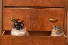 cats + drawers = purrfect combo!