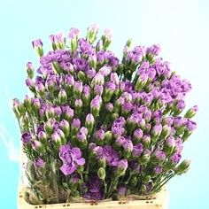 Carnation Spray Moonberry -  2018 Wedding Trend: Ultra Violet Purple. For lilac and purple wedding flowers to suit your colour scheme, visit our website at www.trianglenursery.co.uk/fresh-flowers!