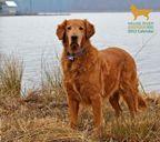 Neuse River Golden Retriever Rescue