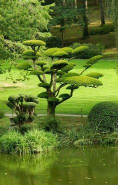 People are familiar with Japanese gardening, think that Chinese gardening would be similar his is untrue. While the Japanese garden is very ordered and serene. Topiary Garden, Garden Trees, Trees To Plant, Garden Art, Beautiful Landscapes, Beautiful Gardens, Japanese Tree, Japanese Park, Japan Garden
