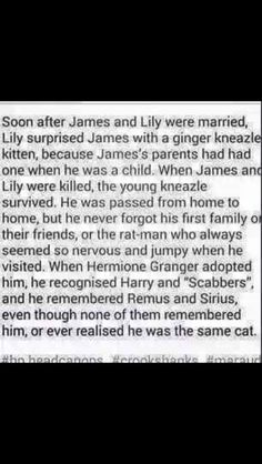 I think Crookshanks would be the Potters cat's offspring or something, otherwise Crookshanks would be at least 12 years old when Hermione got him