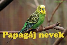 Papagáj nevek A-Z-ig - Állatnevek Parrots, Lol, Bird, Animals, Animales, Animaux, Birds, Parrot, Animal