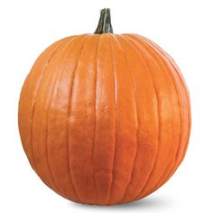 Pumpkins with an amazing deep, bright orange colour that will stand out in your pumpkin patch. Expert has beautiful, dark green, strong and sturdy handles that are supported on a long Biggest Pumpkin, Grow Your Own, Seeds, Veggies, Popular Pins, Halloween, Fruit, Flowers, Vegetable Recipes