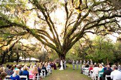 The Wedding Tree, Eden Gardens State Park, FL ABSOLUTELY in LOVE :)