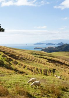 Let's go to new zealand  // coromandel // via smitten studio