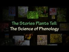 The Stories Plants Tell: The Science of Phenology - YouTube
