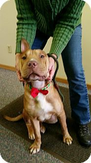 Shar Pei Mix Dog for adoption in Zanesville, Ohio - #511-14 URGENT!