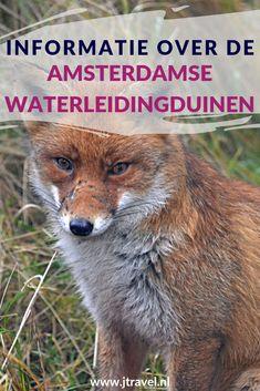 Hier lees je informatie over de Amsterdamse Waterleidingduinen, zoals de dieren, de geschiedenis, het bezoekerscentrum, de wandelroutes en de entree. Meer lezen doe je hier. Lees je mee? #amsterdamsewaterleidingduinen #awd #amsterdamsewaterleidingduinen #wandelen #hiken #informatie #jtravel #jtravelblog