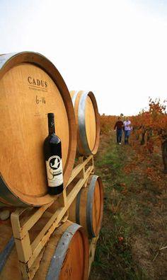 Spangler Vineyards in Roseburg OR, beautiful barrels!