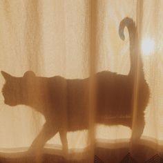 Imagem de cat, shadow, and aesthetic Brown Aesthetic, Aesthetic Photo, Aesthetic Pictures, Aesthetic Light, Cream Aesthetic, Wallpaper Azul, Yennefer Of Vengerberg, Mellow Yellow, New Wall