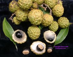 Alupag: Rare Fruit Seeds and Exotic Tropical Fruit Seeds