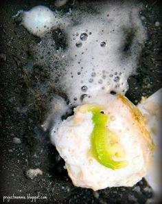 DIY - dinosaur eggs - baking soda fizzy