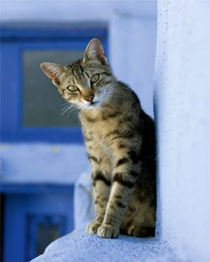 Cats of Greece. Corfu2travel.com #cats #feline #greece #islands #summer